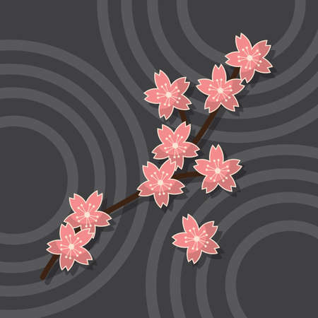 sakura flowers: sakura flowers
