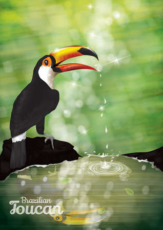 toucan: toucan poster Illustration