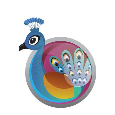 peafowl: peacock Illustration
