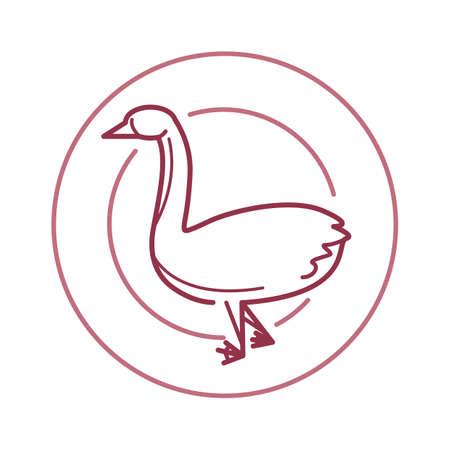 anatidae: duck Illustration