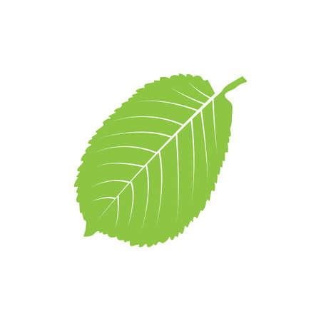 Leaf Reklamní fotografie - 81534872