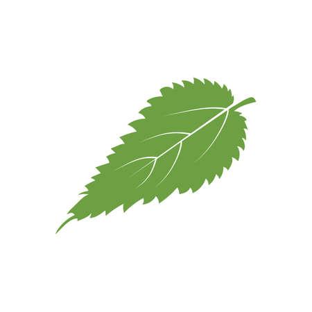 leaf Illustration