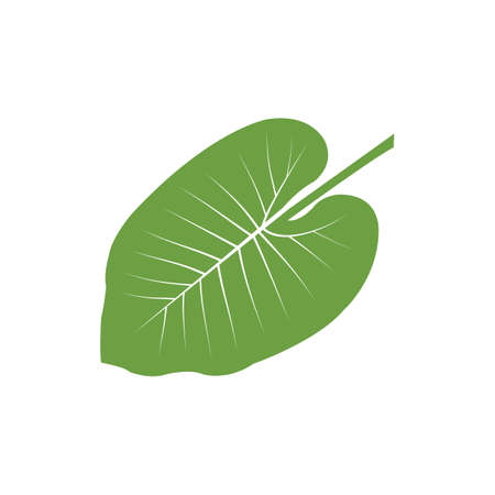 A leaf Illustration. Ilustrace