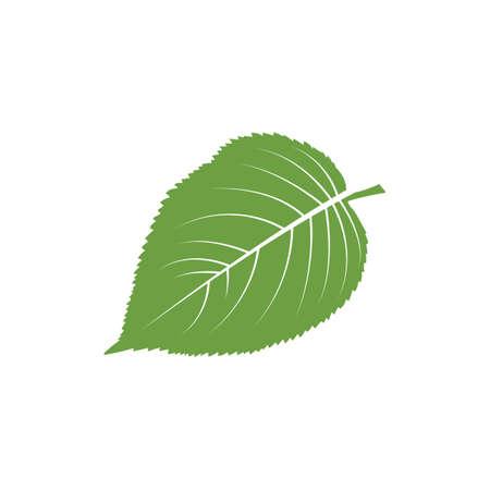 chlorophyll: A leaf illustration.