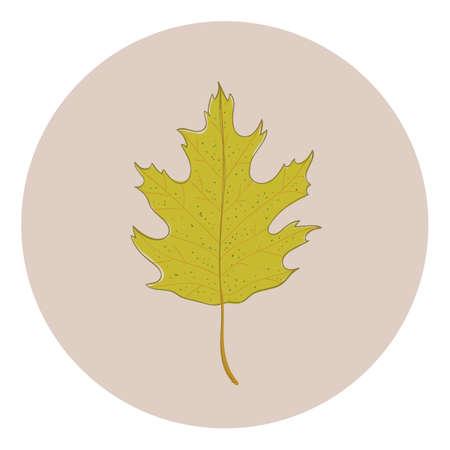 Leaf Reklamní fotografie - 81534968
