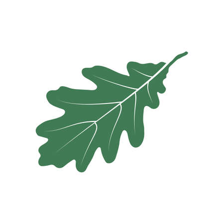 An oak leaf illustration. Illustration