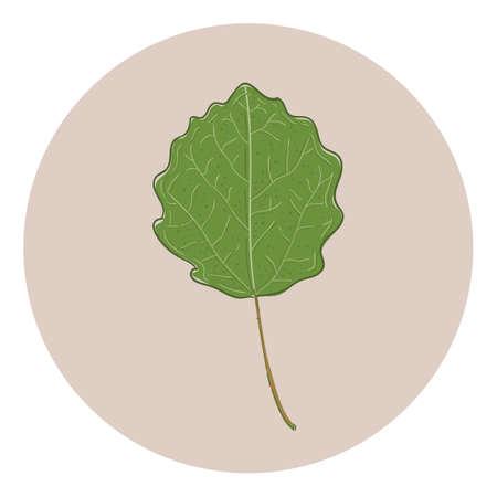 Leaf Reklamní fotografie - 81535025