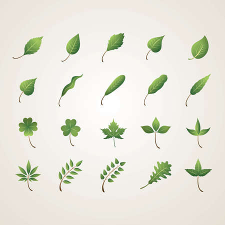 collection of leaves