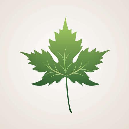 leaf Ilustrace
