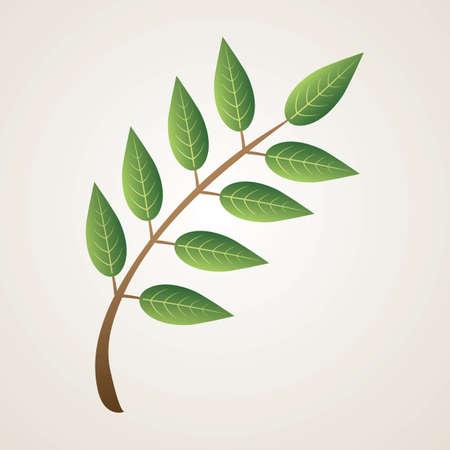 leaf Reklamní fotografie - 81533142