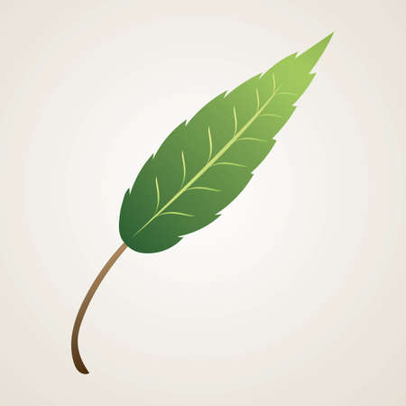 leaf Illusztráció