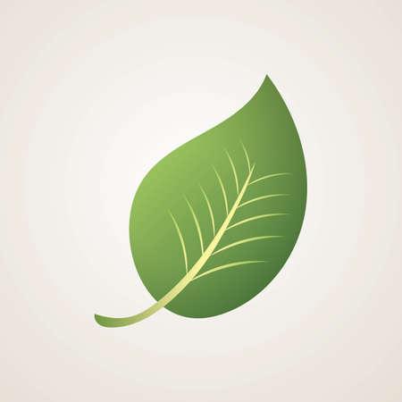 leaf Reklamní fotografie - 81533092