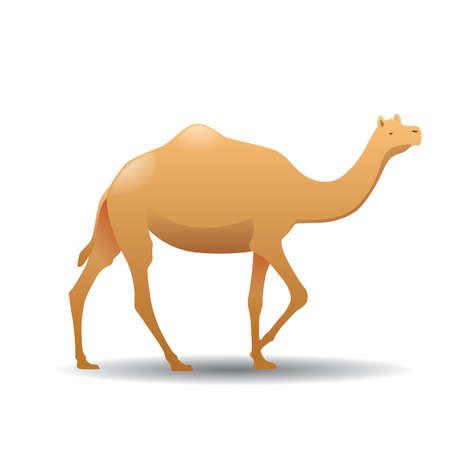 camel Çizim
