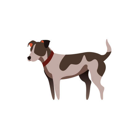Dog Reklamní fotografie - 81601125
