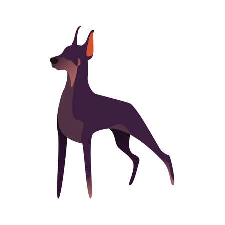 ドーベルマン犬