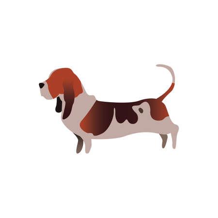basset hound dog 向量圖像