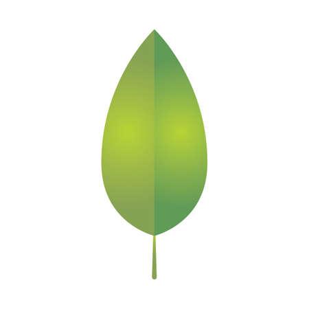 leaf Reklamní fotografie - 81535460