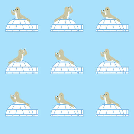 seals with igloos background