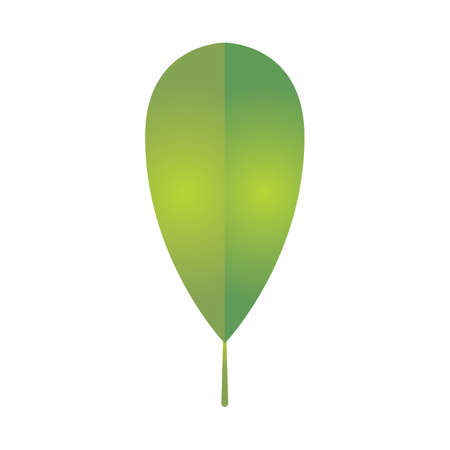 chlorophyll: leaf Illustration