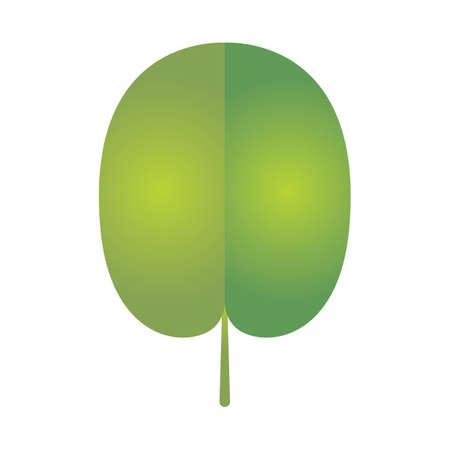 leaf Reklamní fotografie - 81535436