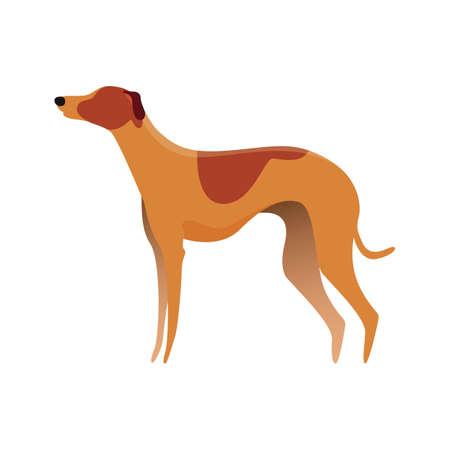 グレイハウンド犬  イラスト・ベクター素材