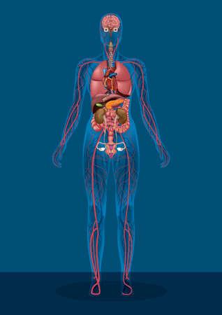 vrouwelijk menselijk lichaam Vector Illustratie