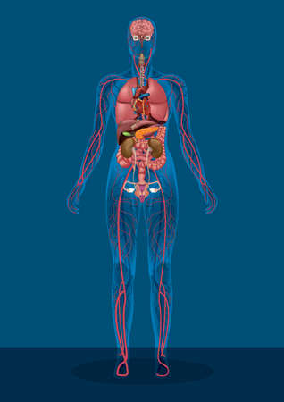 weiblicher menschlicher Körper Vektorgrafik