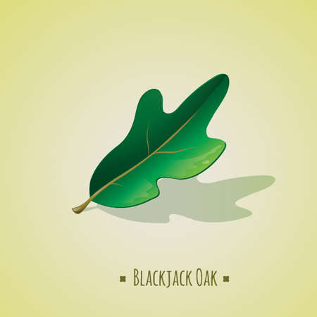 oak leaf: blackjack oak leaf