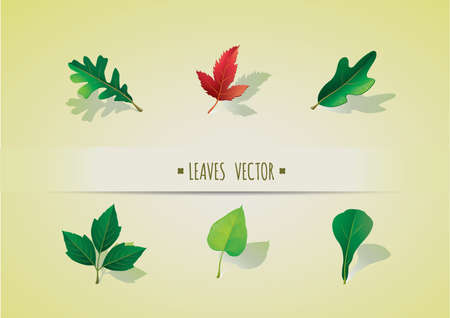 quercus: collection of leaves