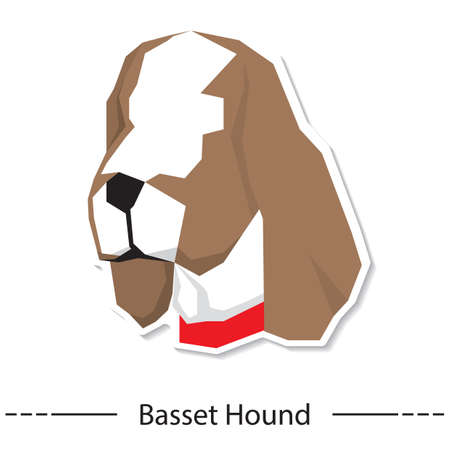 basset hound: basset hound Illustration