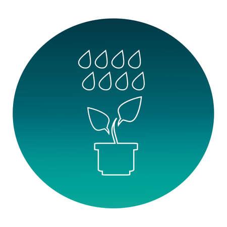 rainwater: plant and rainwater