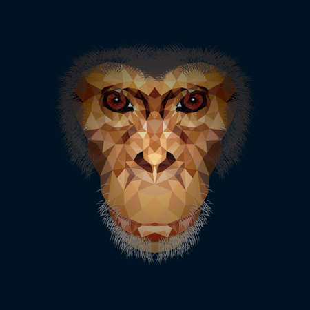 faceted: faceted chimpanzee
