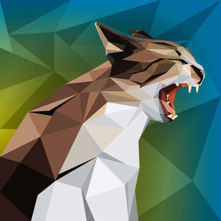 wildcat: faceted wildcat