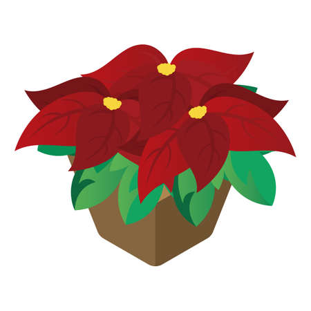 christmas poinsettias flower Ilustração
