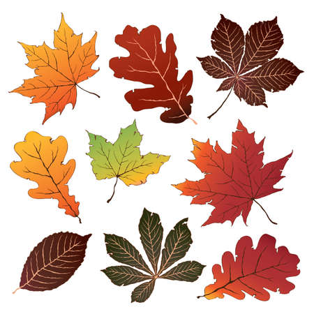 alder: set of autumn leaves Illustration