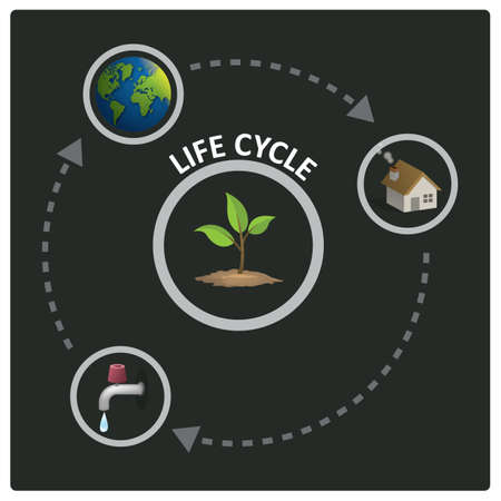 life cycle infographic