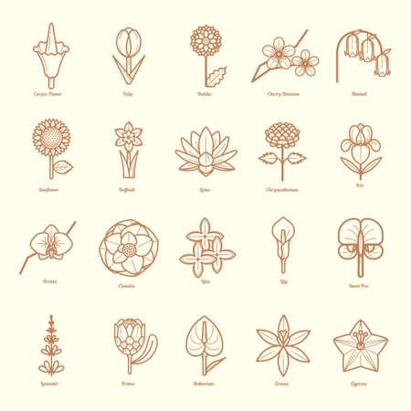 colección de diferentes flores