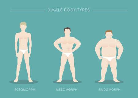 3 つの男性の体のタイプ  イラスト・ベクター素材