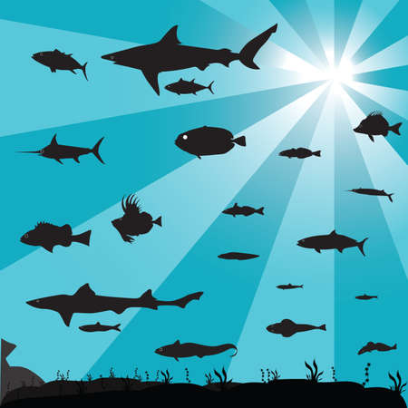 shoal: silhouette of a shoal of fish