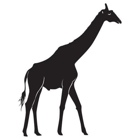 silhouet van giraffe