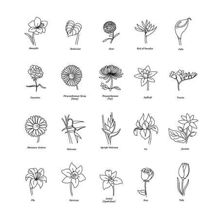 colección de diferentes flores Ilustración de vector