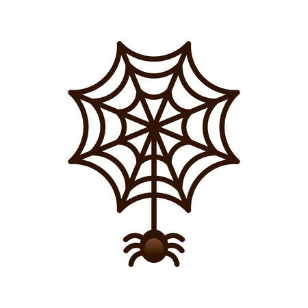spider web: spider and web