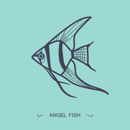 angel fish: angel fish