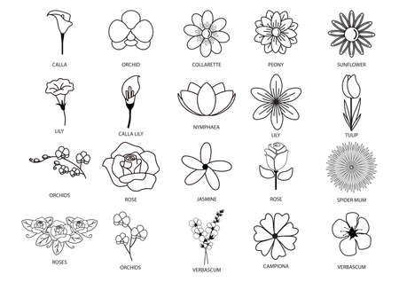 nymphaea: collection of different flowers Illustration
