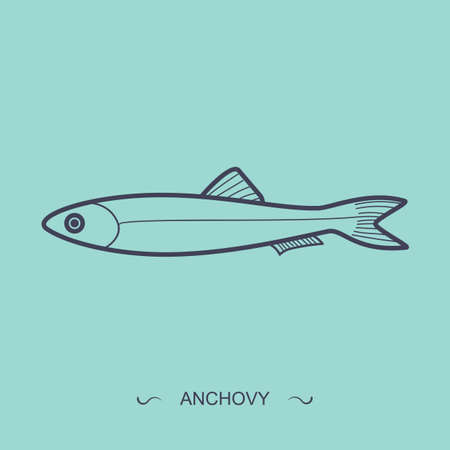 anchovy: anchovy Illustration