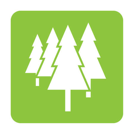 conifers: trees