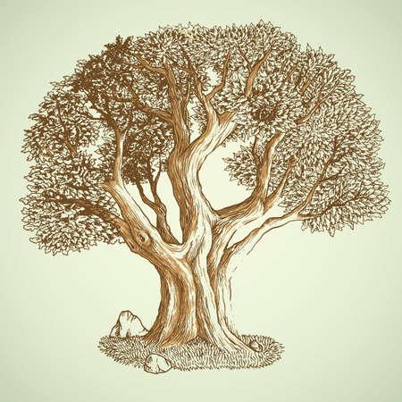 oak tree 일러스트