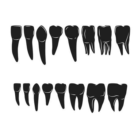 premolar: set of various human tooth