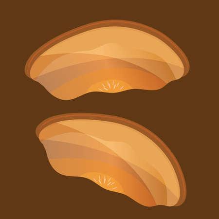 fungi: mushroom