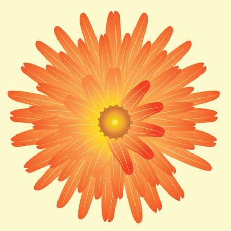 gerbera: gerbera flower Illustration
